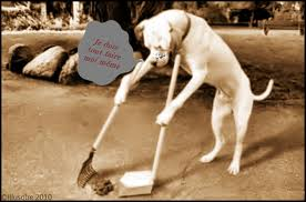 Propreté de votre chien et bonheur d'une maison propre dans Actualité chien-propre