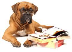 Un livre sympa et simple pour les débutants du monde canin dans Actualité chien-qui-lit