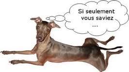 COMMUNIQUER AVEC SON CHIEN COMME AVEC UN ETRE HUMAIN dans Actualité chien-qui-parle