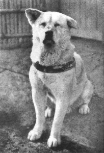 La véritable histoire du chien Hatchiko dans Actualité hatcchi2-204x300