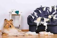 Le syndrome de l'abandon chez le chien dans Communication imagescaxyp4fh