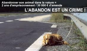 NON A L'ABANDON !!!!!!! dans Actualité sans-titre