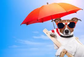 TOUT SAVOIR SUR LES VACANCES DE NOS CHIENS dans Actualité chien-en-vacances